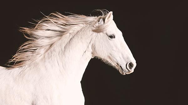 Nature Equus